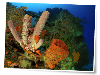 Saba Conservation Foundation